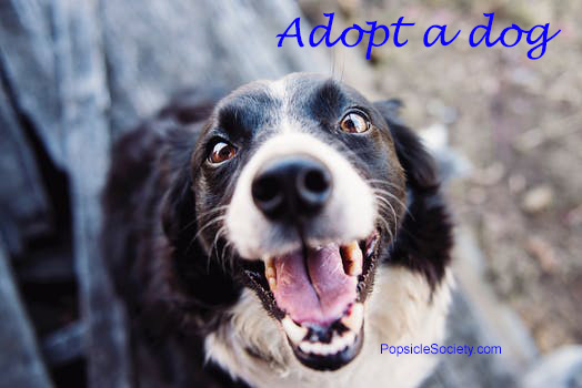 PopsicleSociety-adopt a dog