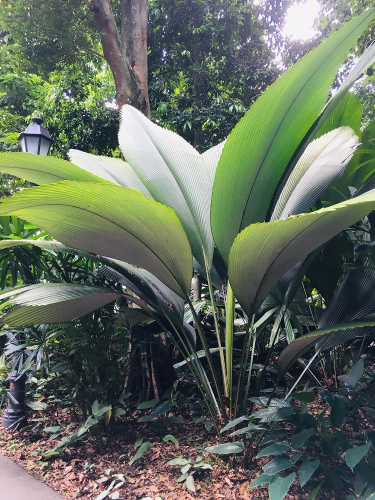 PopsicleSociety_Singapore Botanic Garden6