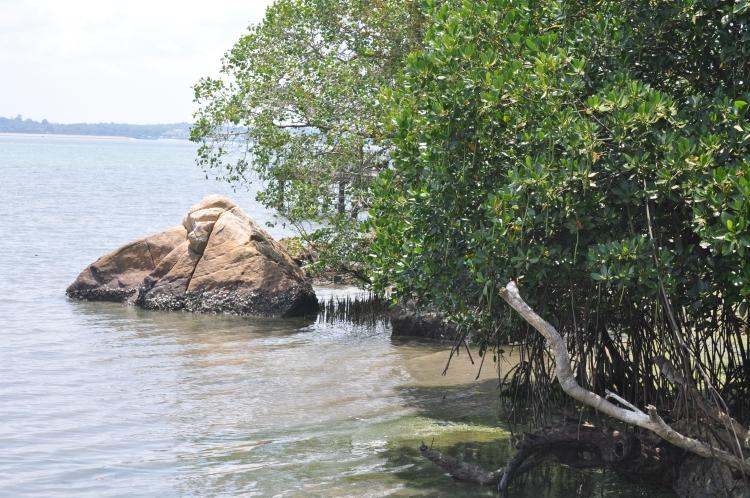 PopsicleSociety-Pulau Ubin