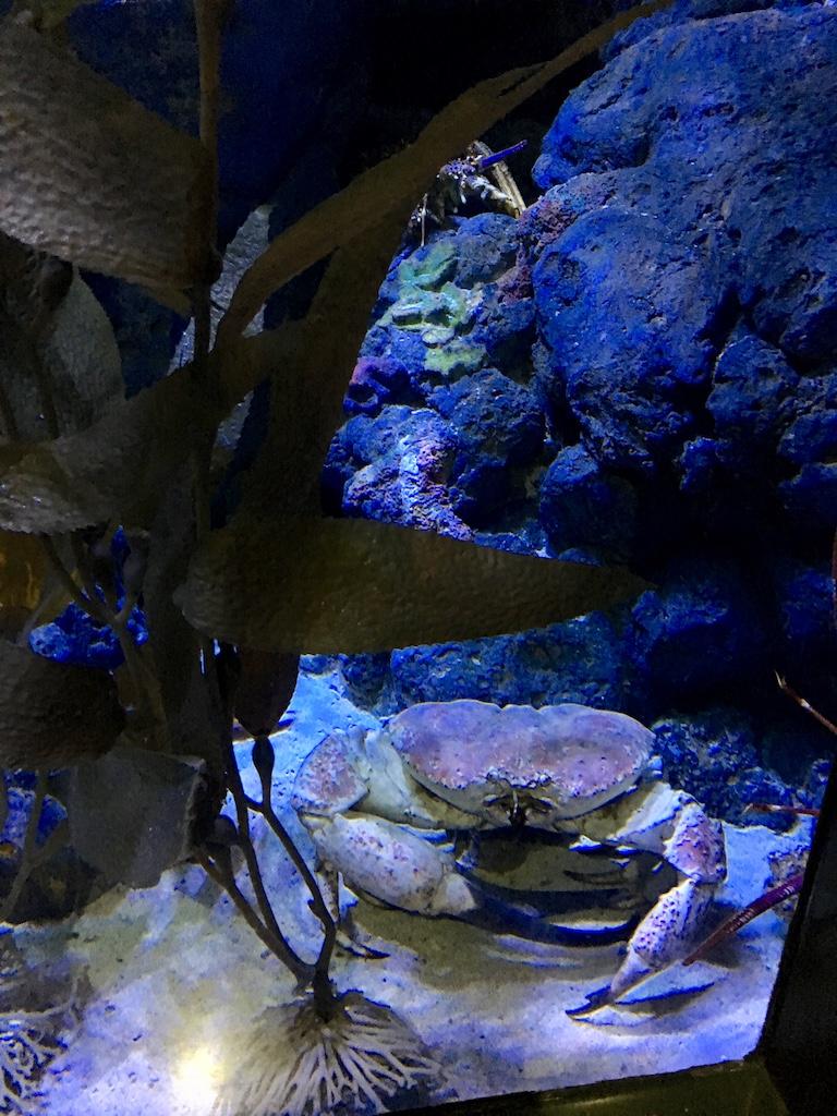 popsicle society-sea aquarium singapore1