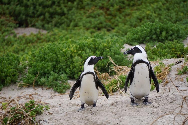 Popsicle Society-penguins