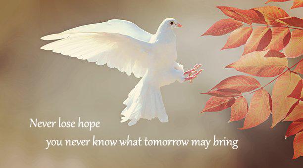 dove-hope_Popsicle Society