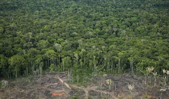 Amazon rainforest deforestation_2019_Popsicle Society