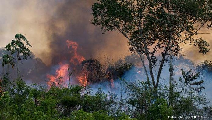Amazon rainforest fire_2019_Popsicle Society