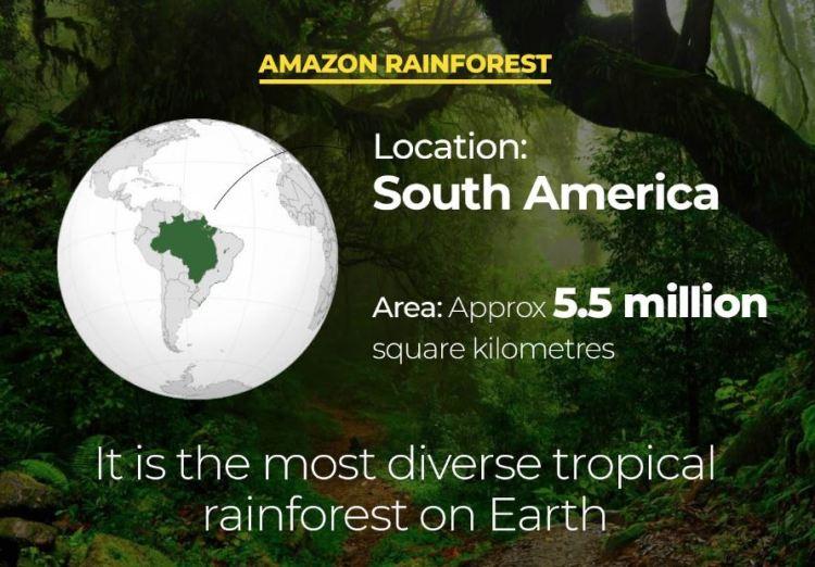 Amazon rainforest_Popsicle Society