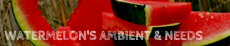 Watermelon ambient_popsicle society