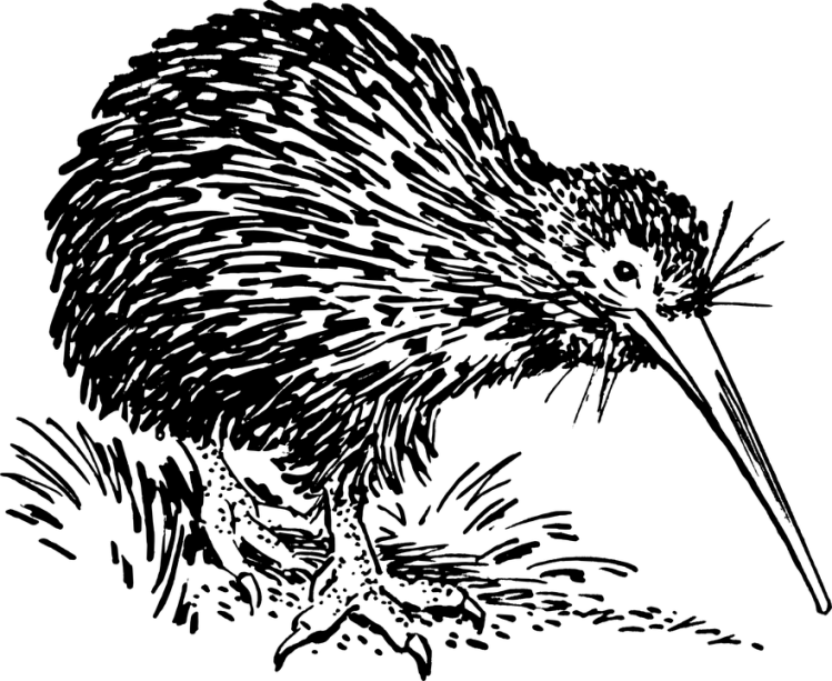 Kiwi bird_Popsicle Society