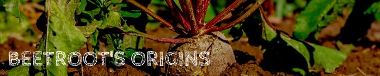 Beetroot origins_Popsicle Society