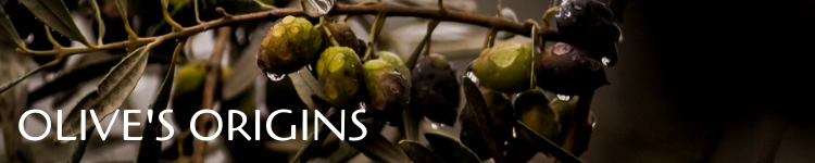 Olive origins_Popsicle Society