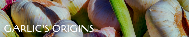 Garlic origins_Popsicle Society