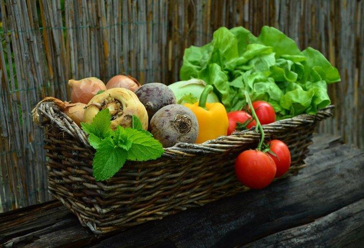 Vegetables_Popsicle Society
