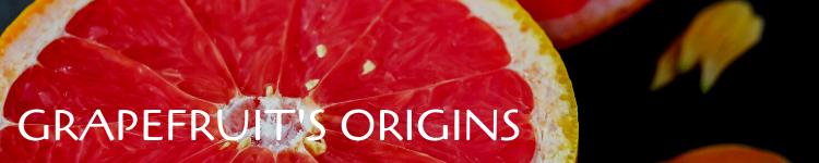 Grapefruit origins_Popsicle Society